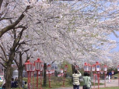 愛宕公園の桜(青森県)