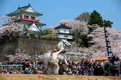 城山公園の桜(宮城県)