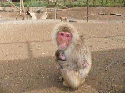 【休園中】高宕山自然動物園