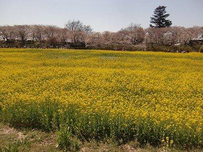 埼玉県営権現堂公園