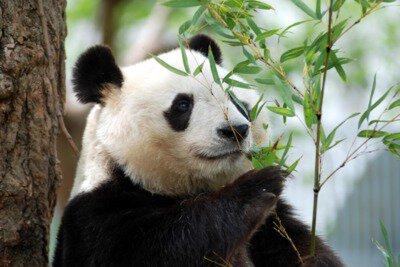 【一部休止】神戸市立王子動物園