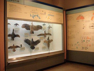 【臨時休館】我孫子市鳥の博物館