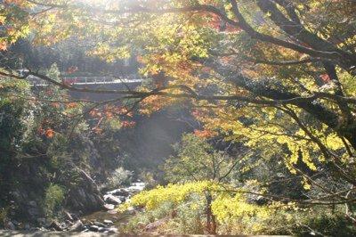 柏原渓谷の紅葉
