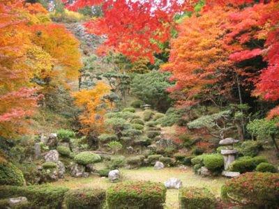 清瀧寺徳源院の紅葉
