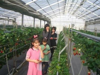 季節の香り農園~ヒロファーム~ いちご狩り