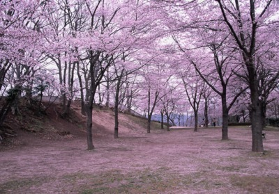 弁天山公園