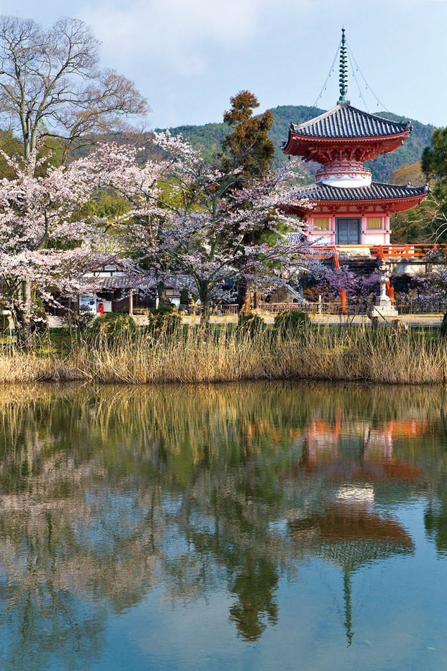 旧嵯峨御所 大本山大覚寺の桜