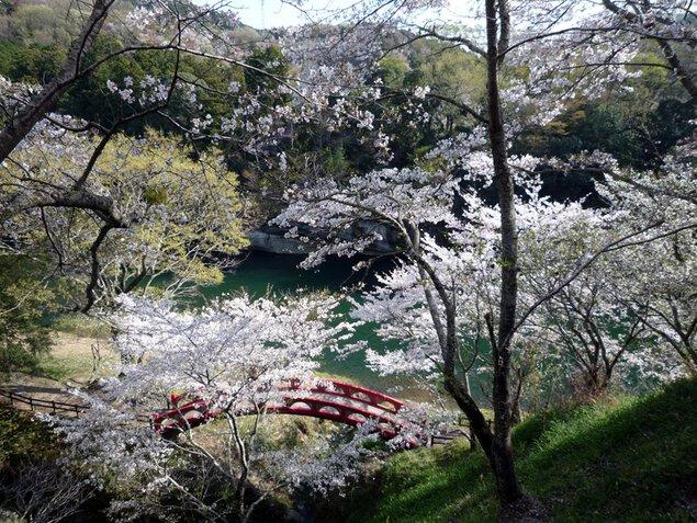 桜淵公園の桜