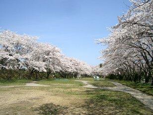 宮川緑地公園