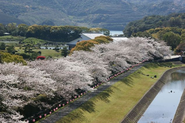 南楽園(外堀)の桜