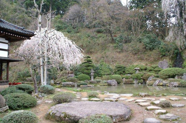 玉川寺の桜