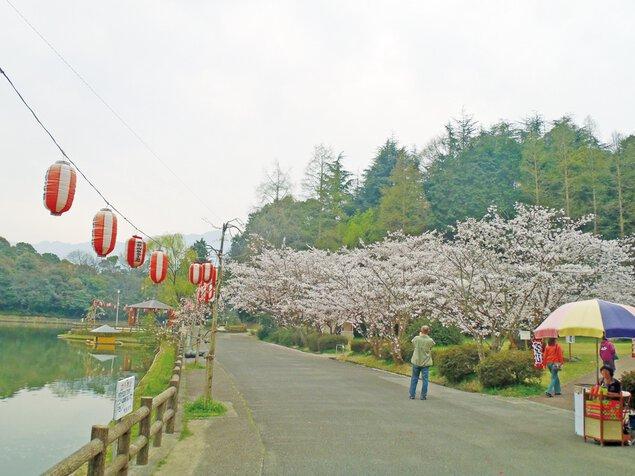 滝の宮公園の桜