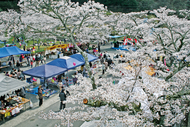 家地川公園の桜