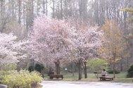 安平町鹿公園