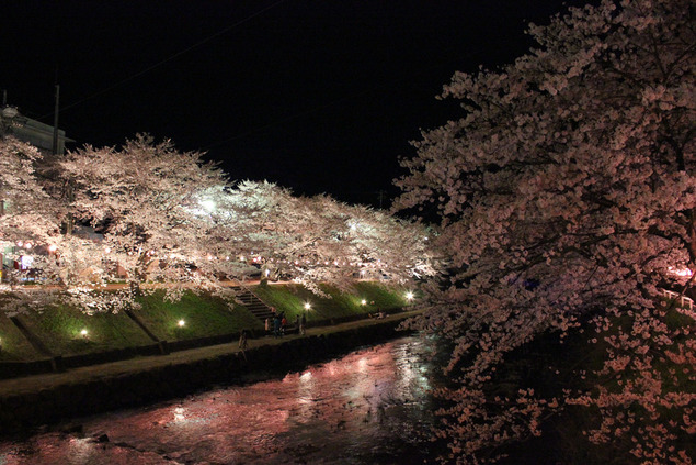 厚狭川河畔の桜
