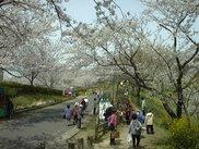 竜王山公園