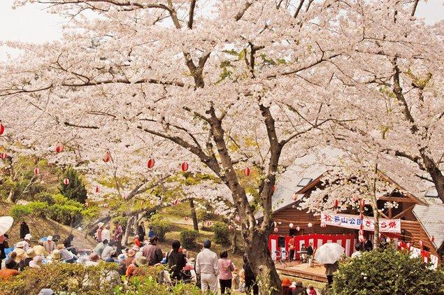 若山公園の桜
