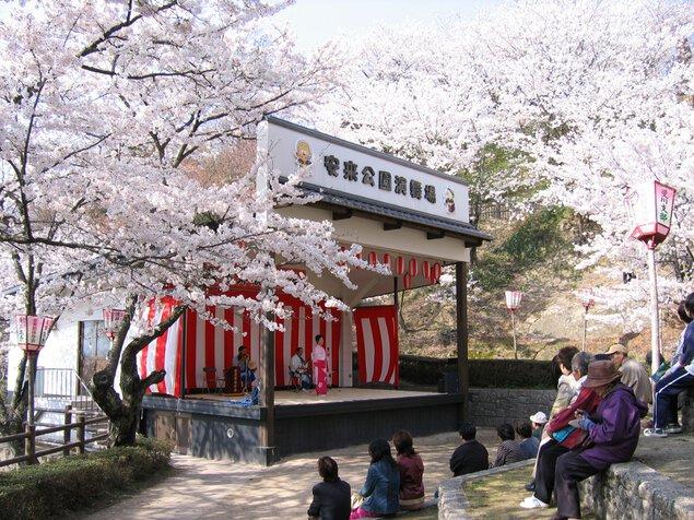 安来公園の桜