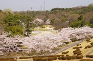 京都府立山城総合運動公園