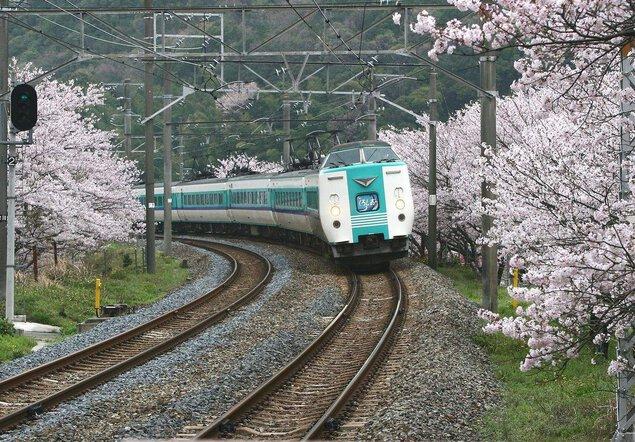 山中渓の桜の桜