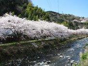 千歳川沿い