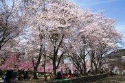 笠置キャンプ場(笠置山自然公園)