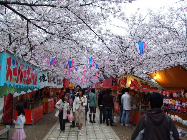 諏訪の桜トンネルの桜