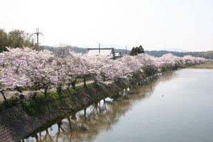 野洲川河畔岩上橋付近