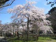 清瀧寺徳源院
