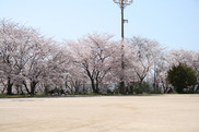 桜ヶ丘グラウンド