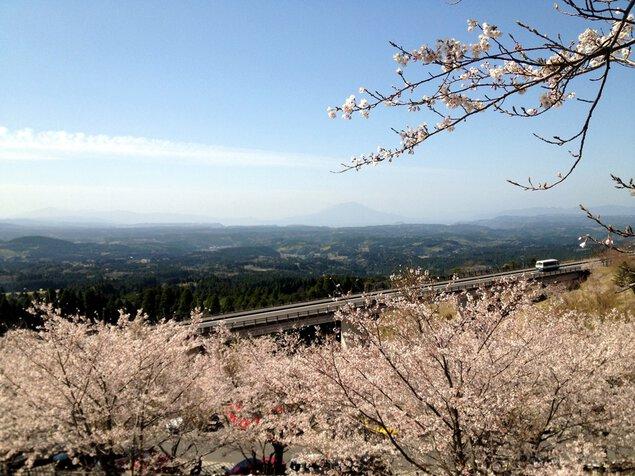 霧島神話の里公園の桜