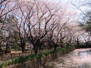 城之内公園