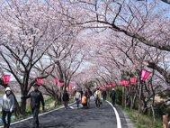 藤枝金比羅山・瀬戸川堤防