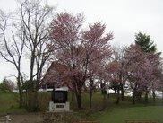 北竜町金比羅公園