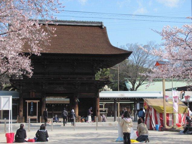 尾張大国霊神社(国府宮)の桜