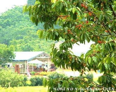 森の中の果樹園