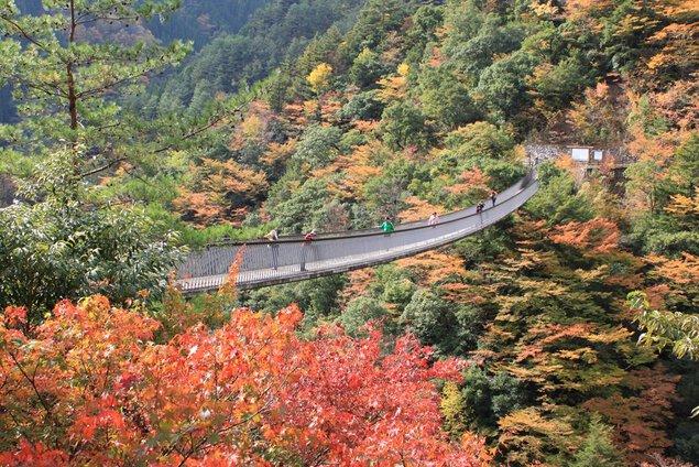 五家荘(梅の木轟公園吊橋)の紅葉