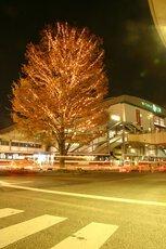 三鷹駅南口6商店街街路樹イルミネーション