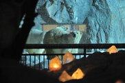 旭山動物園「雪あかりの動物園」