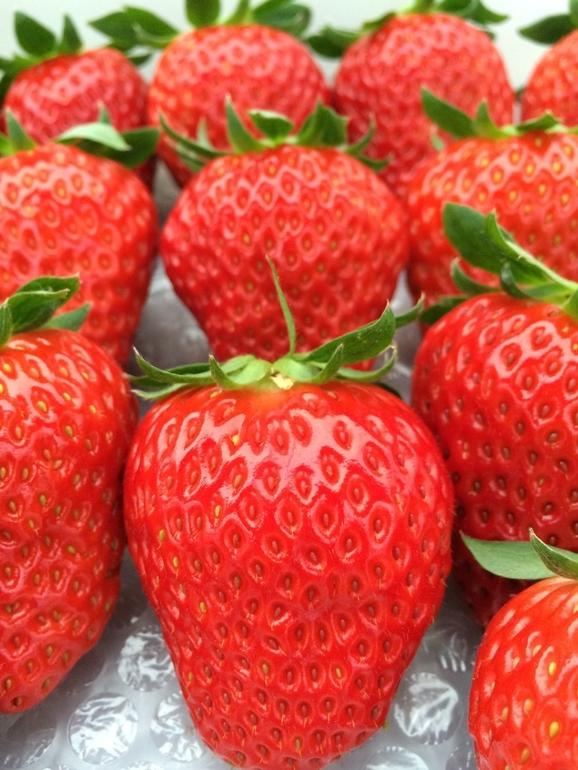 Strawberry Hunt いちご狩り