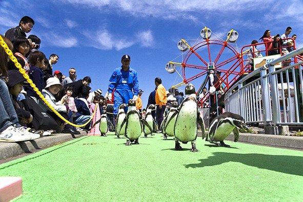 【臨時休館】室蘭水族館こどもまつり