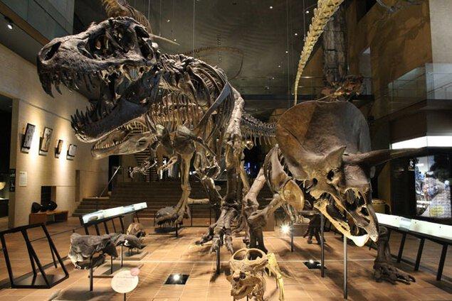 北九州市立いのちのたび博物館 自然史・歴史博物館