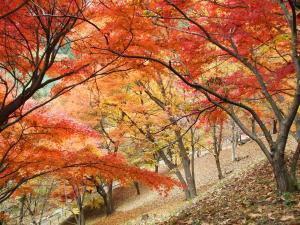 万力公園・万葉の森