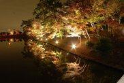 【紅葉・見頃】東公園