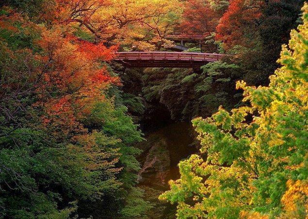 名勝 猿橋の紅葉
