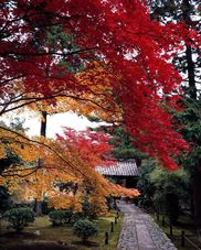 【紅葉・見頃】嵐山(鹿王院)
