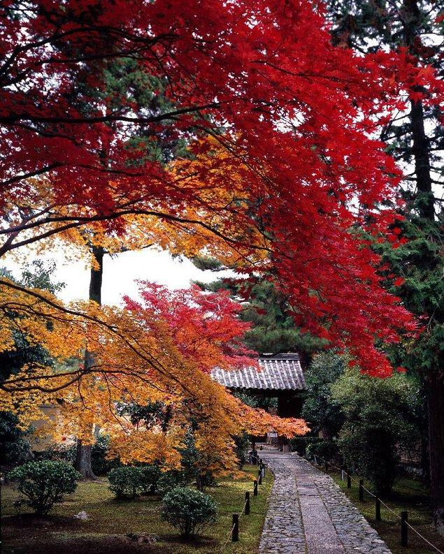 嵐山(鹿王院)の紅葉