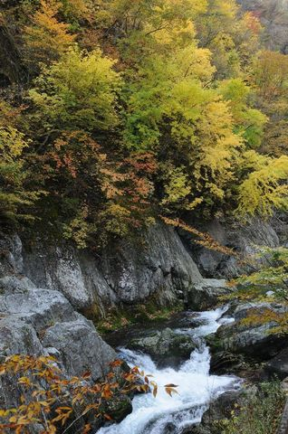 久慈渓流の紅葉