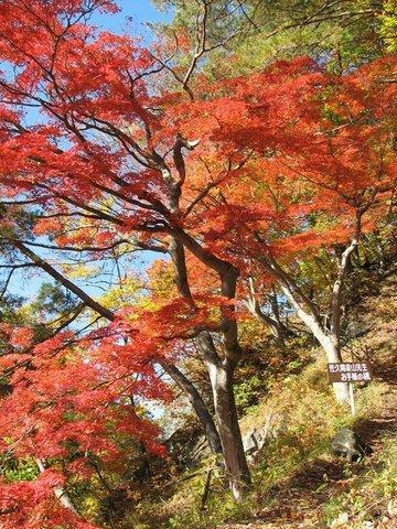 久米路峡の紅葉