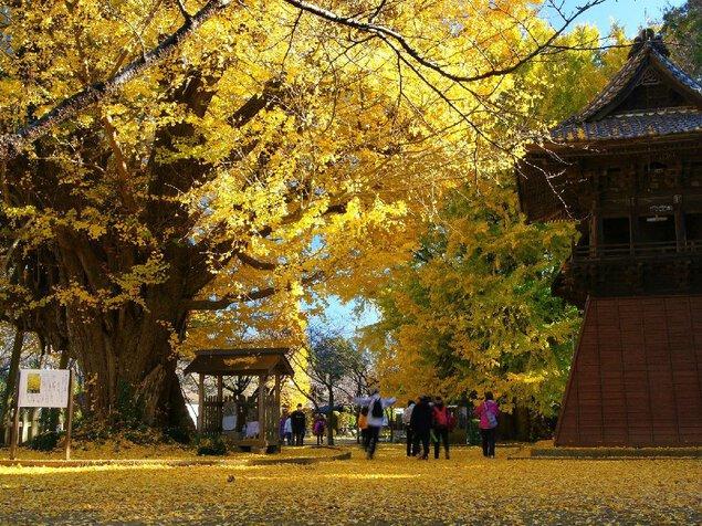 西蓮寺の紅葉